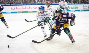 Augsburg empfängt die formstarken Eisbären Berlin – Panther wollen mit einem Sieg ihre Playoff-Position festigen