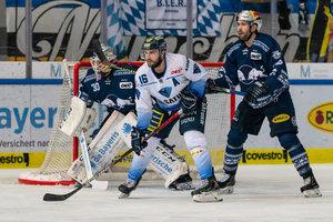 Bayerische Derbys in München und Straubing, Mannheim will gegen Düsseldorf zurück in die Erfolgsspur